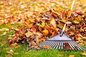 Raked Leaves Image